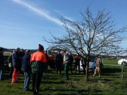 Obstbaumschnittkurs des Verschönerungsverein Krunkel-Epgert
